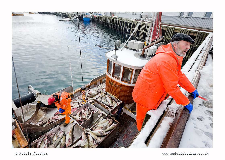 stockfish Lofoten cod Norway fishing NOlof_1402a