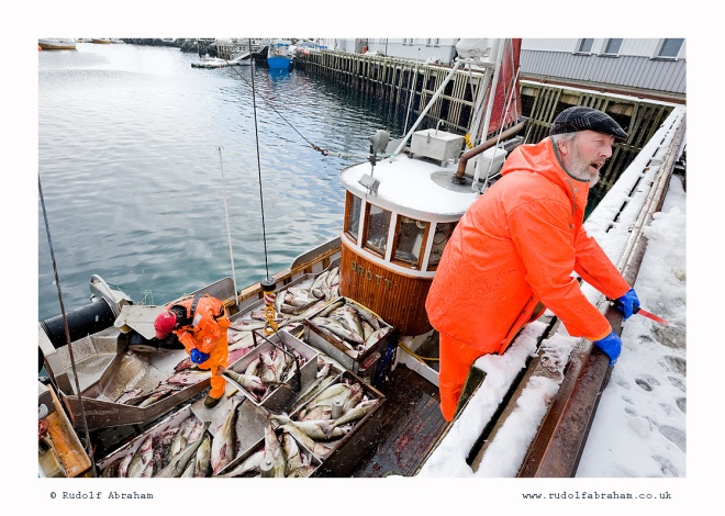 stockfish Lofoten cod Norway fishing NOlof_1402a
