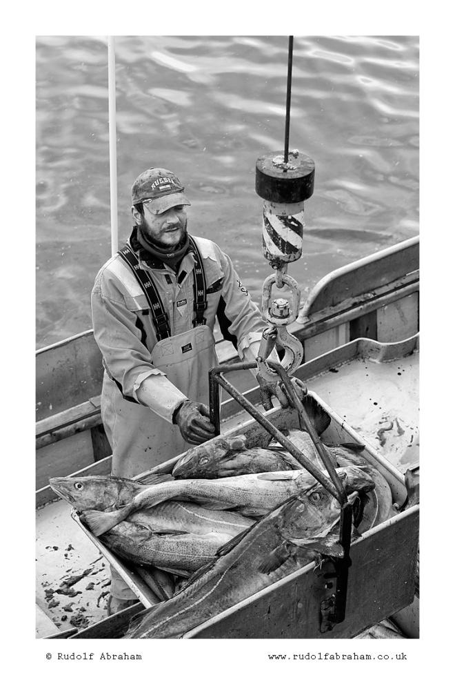 Norway stockfish cod fishing photo Lofoten NOlof_1418b