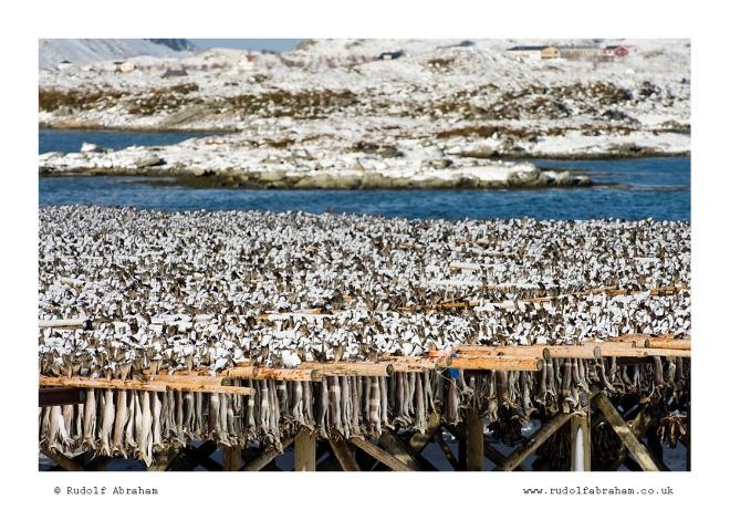 Norway Arctic stock photography Lofoten NOlof_2023