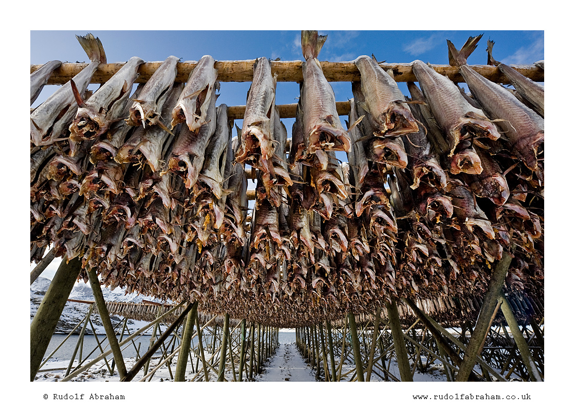 Stockfish rudolf abraham 39 s blog for Salted cod fish near me