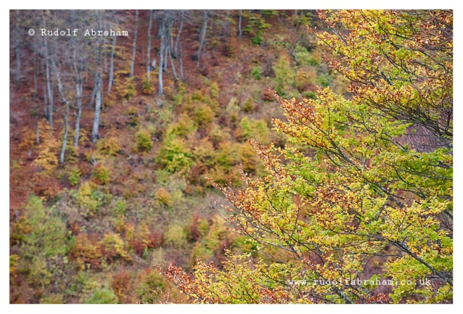 Autumn colours. Hiking on Visitor, a mountain near Plav, Montenegro, in October. © Rudolf Abraham