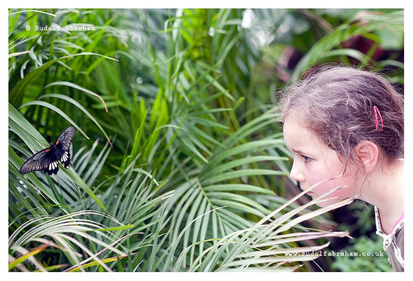 Sensational Butterflies exhibition, Natural History Museum, London, UK, 2015 © Rudolf Abraham